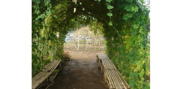 このトンネルの周囲にもたくさんの植物が