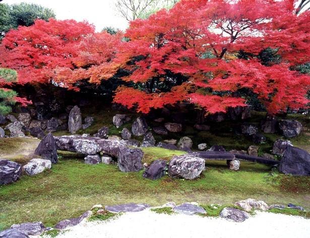 小堀遠州が整えた庭園、北庭の風景。秋の紅葉の美しさは特に格別