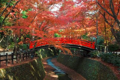 朱塗りの鶯橋と燃えるような赤に染まった紅葉