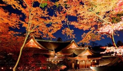 【写真を見る】国宝に指定されている八棟造りの本殿と紅葉ライトアップは絶景