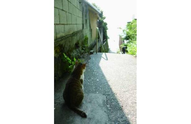 パワースポットでもある江の島にはネコがいっぱい