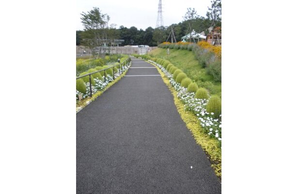 「かっぜったち〜ぬ〜♪」と松田聖子を歌いながら遊歩道を散策。きょうからわたしは心の旅人