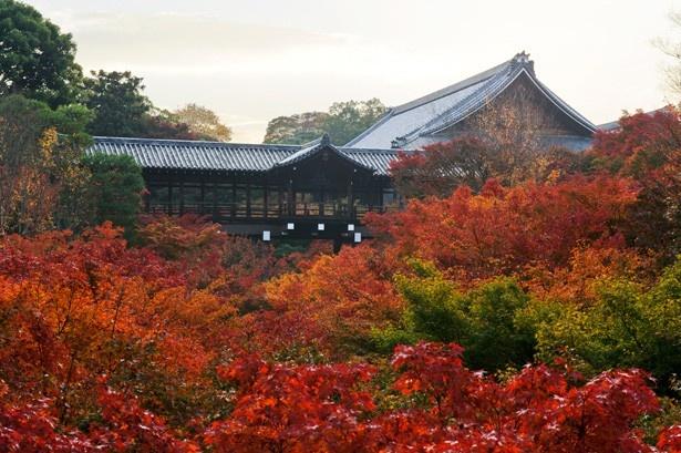 燃えるような美しい紅葉に包まれる通天橋