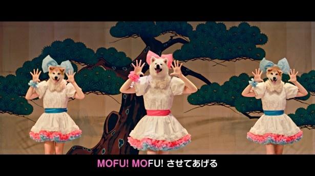 世界初の秋田犬アイドルグループ「MOFU MOFU☆DOGS」が、デビュー曲で秋田をPR!