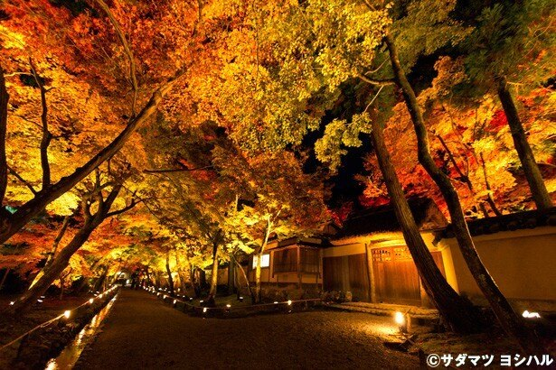 山門から出口の参道では、紅葉のトンネルを楽しめる!/宝厳院
