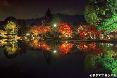 大沢池に映りこむライトアップされた紅葉や緑の木々は、一枚の絵のような美しさ!/大覚寺