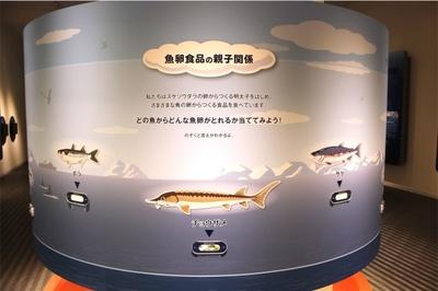 めんたいラボのスコープディスプレイでは明太子以外の魚卵食品について学ぶことができる