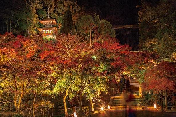 多宝塔が紅葉の中に浮かび上がる永観堂