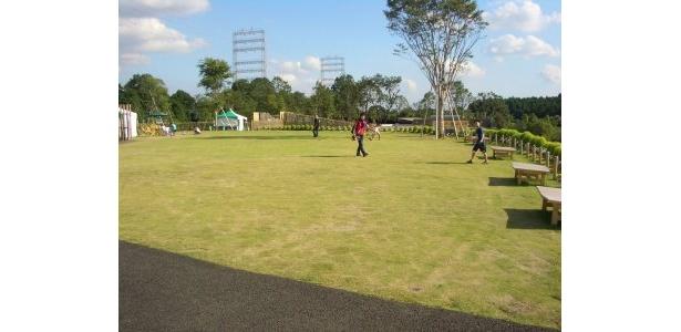 こちらが「丘の広場」。緑の芝に癒されます〜