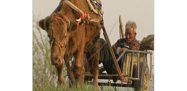 老いた農夫と一頭の老いた牛の暮らしを見つめたドキュメンタリー