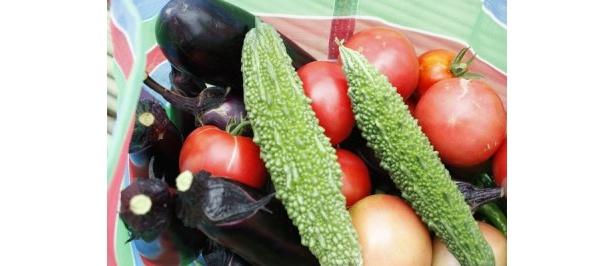 ナス、トマト、ゴーヤなど、夏野菜をどっさり収穫
