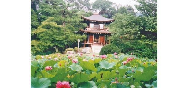 東山を借景とした約2万平方メートルもの広さの池泉舟遊式庭園「氷池園」など見どころがいっぱい/勧修寺