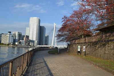 きれいに整備された隅田川沿いの歩道(「佃公園」)