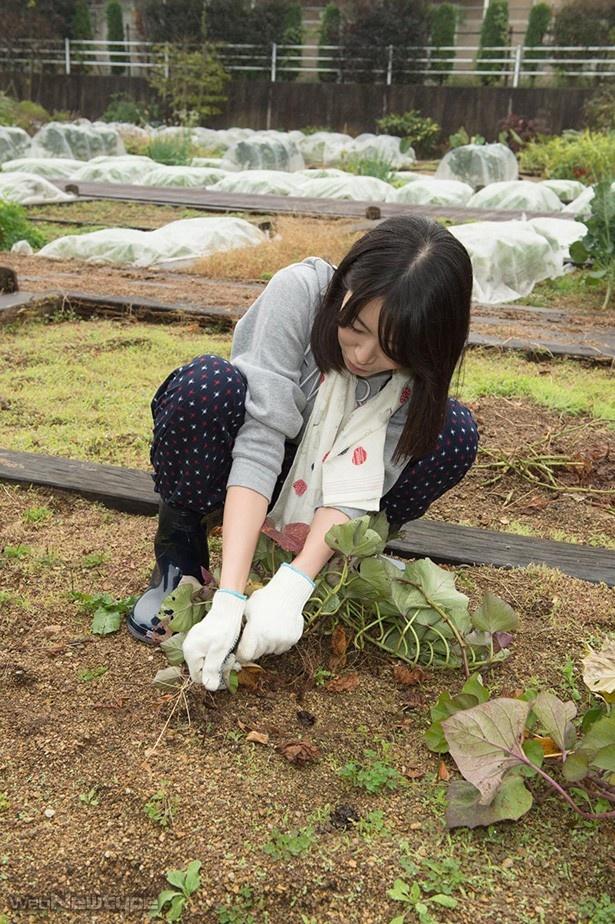 青木瑠璃子、セレブの地でお芋様を収穫する