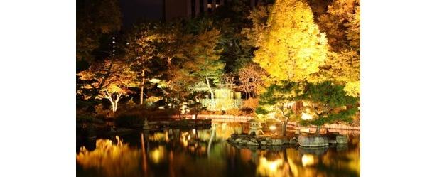 中島公園ライトアップ。公園前の菖蒲池にも景色が映りこみ幻想的な雰囲気が楽しめる