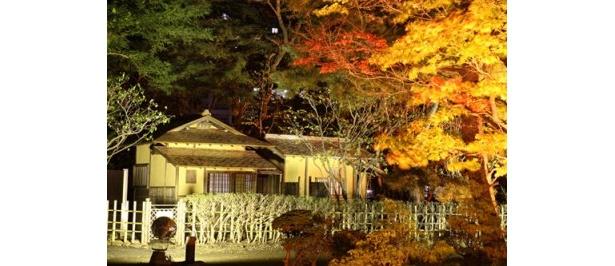 光に包まれる国指定重要文化財の茶室「八窓庵(はっそうあん)」