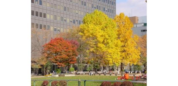 樹木の種類が多く紅葉がカラフルな「大通公園」