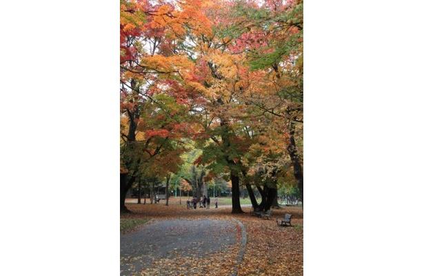 赤や黄色に色付いたコントラストが鮮やかな「円山公園」