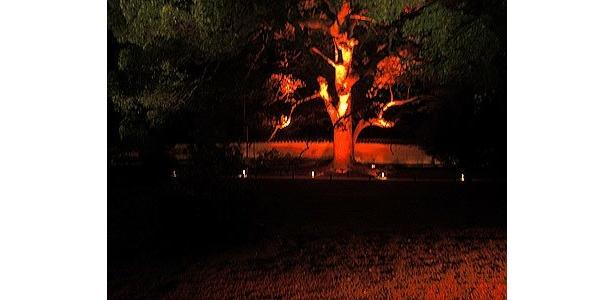 青いライトアップも時間が経つと、紅蓮の炎をイメージした赤いライトアップに変わり、以降ループ点灯する