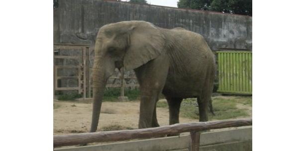 ゾウの前にはベンチがあり、ゆっくり見られるようになっている
