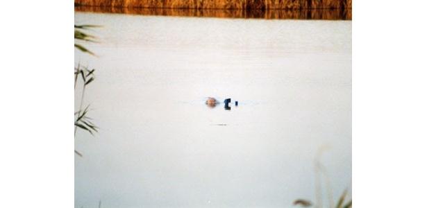 水中に潜ってゆく潜水艦。…沈んでいるだけ!?
