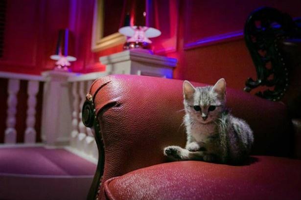 【写真を見る】おしゃれな猫カフェMoCHAの新店舗はまるでお城の中のよう!