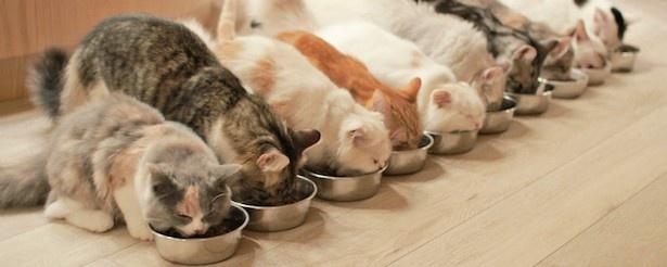 猫カフェMoCHA名物、「可愛いすぎる」と大人気のごはんタイム