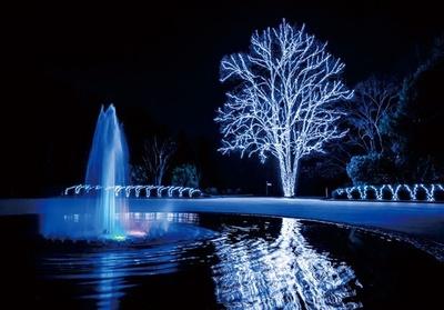 映画の舞台となった北山門広場のトウカエデと噴水は、一番の見どころ。水面に映える輝きも美しく、時を忘れて眺めてしまう光景/京都府立植物園