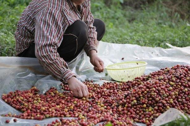 【写真を見る】「MUJIブレンド」の使用コーヒー豆