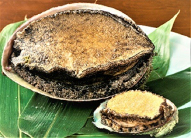 【写真を見る】肉付きが良く、ふくよかで身の締まった最上級と言われる千葉県大原産「黒あわび」を使用