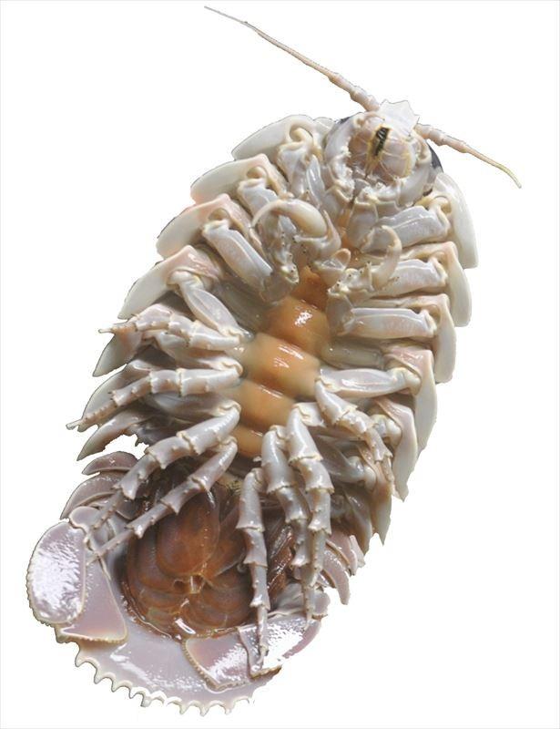 サンシャイン水族館は、深海生物をテーマにしたイベント「ゾクゾク深海生物」を開催する