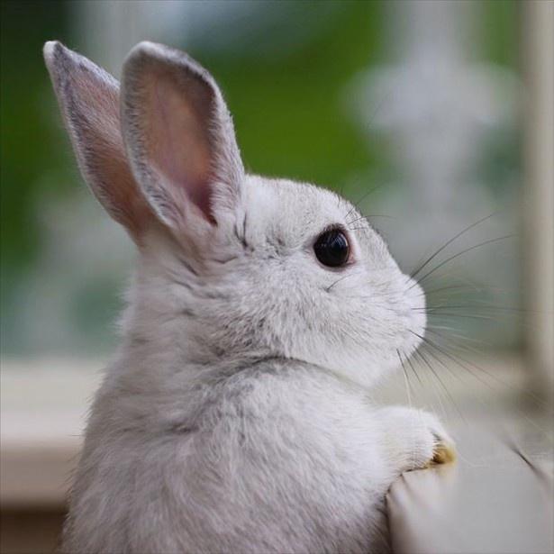 ときどきウサギの写真も!