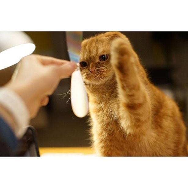 猫が触るたびにフェルムプロペラの動きが変わるので、飽きずに遊べる