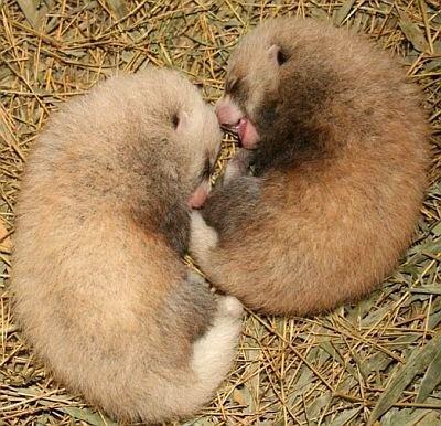 小さい!かわいい!生まれたての双子