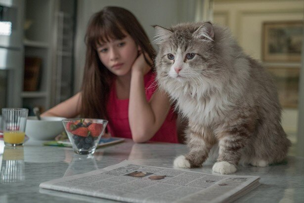 『メン・イン・キャット』には「まさか!」の猫シーン満載!