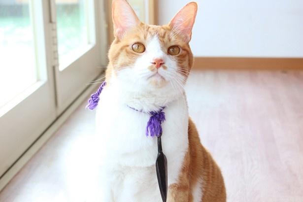 『猫忍』ということで首からはクナイ