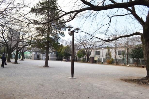 広々とした公園は、安心して子供も遊ばせられる(上池袋さくら公園)