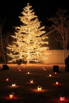 星野エリアのシンボルツリーは高さ10mの本物のもみの木