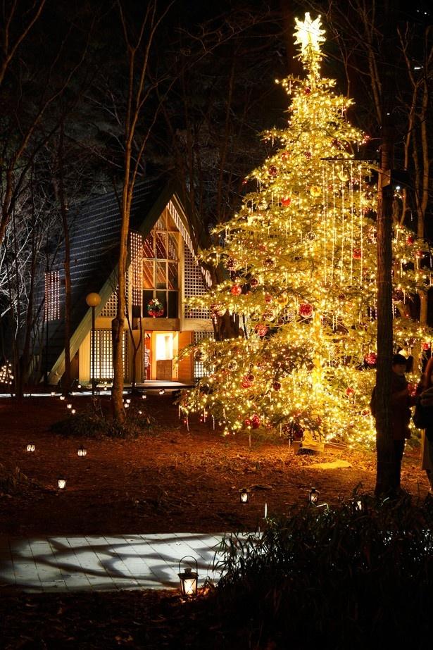 静寂の森を照らすランタンとキャンドルの灯り。まるでおとぎの国のよう