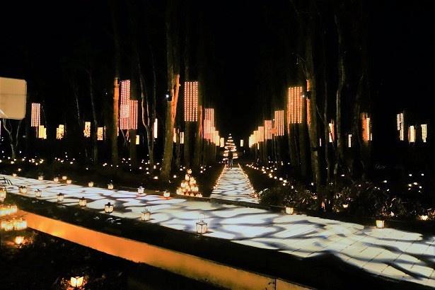 【写真を見る】教会の森に浮かぶ「光の十字路」を散策