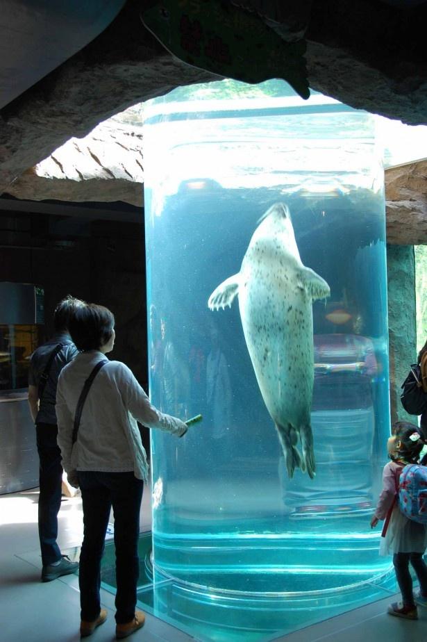旭山動物園・あざらし館 マリンウェイ画像