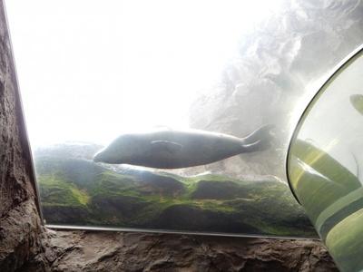 旭山動物園・あざらし館 マリンウェイから上を見たところ