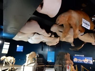 旭山動物園・ほっきょくぐま館 ホール