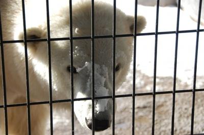 旭山動物園・ほっきょくぐま館屋外サツキ