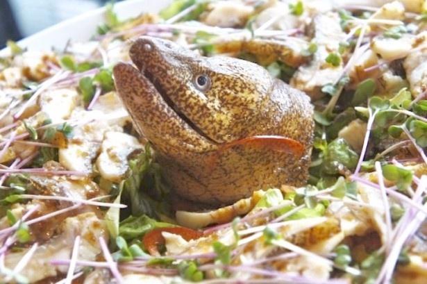 """日本酒片手に""""珍怪魚""""を楽しめるイベントが開催!普段食べたことのない珍怪魚だけど実はおいしいかも…"""