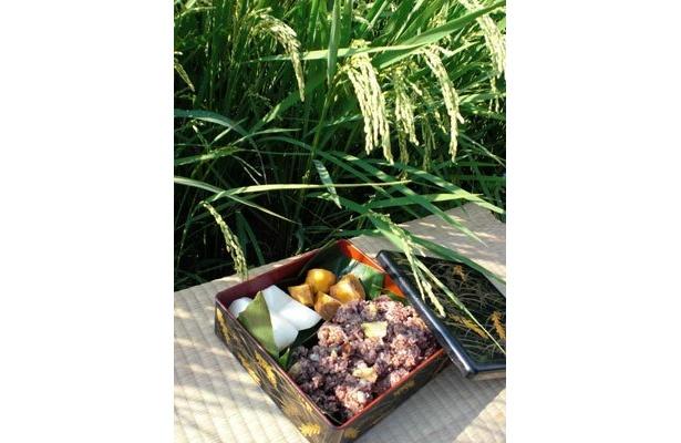 稲の穂と「にぼし」。こんな感じで、昔の人は農作業中に食べていたんんでしょうね