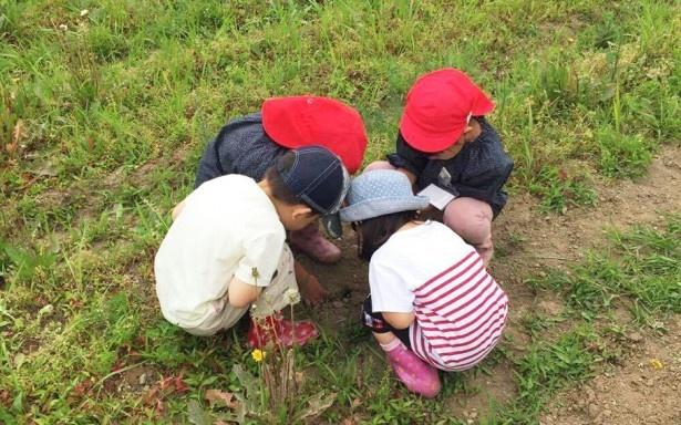 夢中になって農業に取り組む子どもたち