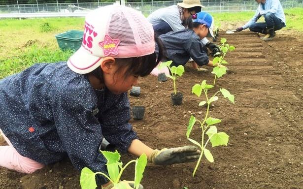 「農業や料理人の仕事を少しでも理解して将来につなげてもらえるといいですね」と横島さんは語る