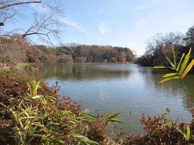 西荻窪駅から徒歩20分のところにある善福寺公園。春は桜の名所としても知られる