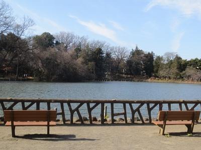 善福寺公園内にはいたる所にベンチがある